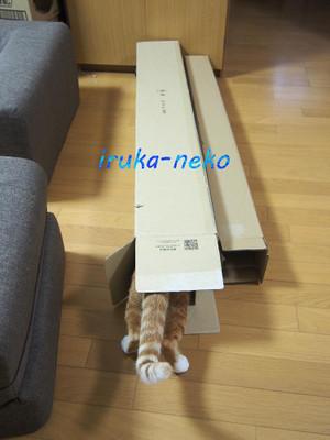 20171207hako1