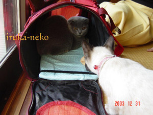 20031231neko1