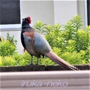 20190610kiji
